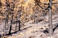Effects of the Fire in a Forest stock photography