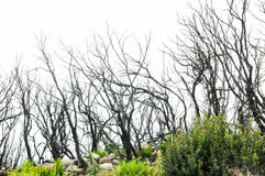 Effects of the Fire in a Forest Royalty Free Stock Photos