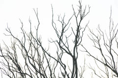 Effects of the Fire in a Forest Stock Image