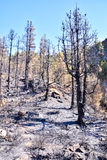 Effects of the Fire in a Forest Stock Photo