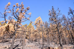 Effects of the Fire in a Forest Stock Images