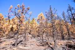 Effects of the Fire in a Forest royalty free stock photography