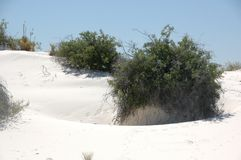 Effects of plant growth in dunes Stock Photography