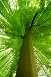 Effectuer la scène de nature Photo libre de droits