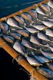 Effectuer les poissons séchés au soleil dans Tapmun, Hong Kong Images stock