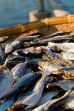 Effectuer les poissons séchés au soleil dans Tapmun, Hong Kong Photo stock