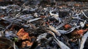 Effekt des Brandes und des Feuers auf Boden und Blatt Stockbild