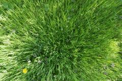 Effekt des grünen Grases 3D stockfoto