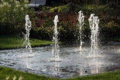 Effekt för sakkunnigträdgårdvatten Arkivbilder