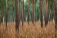 Effekt för suddighet för landskapbildpinjeskog konstnärlig Royaltyfri Foto