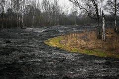 Effekte des Brennens des trockenen Grases im Wald Lizenzfreies Stockfoto