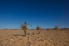 Effekte des Klimawandels Stockbild