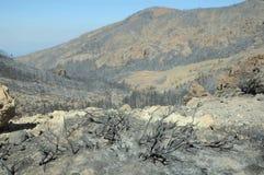 Effekter av branden i en skog royaltyfri foto