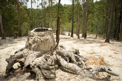Effekter av skogsavverkning royaltyfri bild