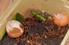 Effektivt bruk av organisk avfalls i ett privat hus utanför staden Bruket av processar av förfall för man arkivbild