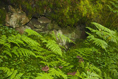 Effet décoratif de la nature Photos libres de droits