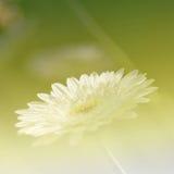 Effet de champ lumineux de fond de fleurs photographie stock libre de droits