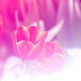 Effet de champ lumineux de fond de fleurs photographie stock