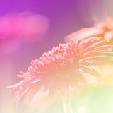 Effet de champ lumineux de fond de fleurs image stock