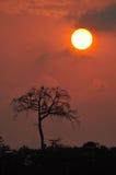 Effet de Harmattan Photographie stock libre de droits