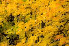 Effet rêveur de feuillage d'automne Images stock