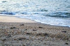 Effets après une tempête sur le bord de mer Photo libre de droits