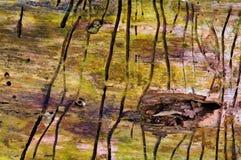 Effets d'un coléoptère d'écorce de bouleau Photographie stock