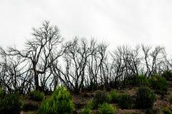 Effetti del fuoco in una foresta Fotografia Stock