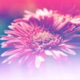 Effetto di campo luminoso del fondo dei fiori Fotografie Stock Libere da Diritti