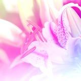 Effetto di campo luminoso del fondo dei fiori Immagini Stock