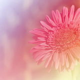Effetto di campo luminoso del fondo dei fiori Fotografia Stock