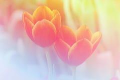 Effetto di campo luminoso del fondo dei fiori Immagine Stock Libera da Diritti