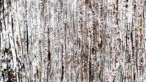 Effetto di legno Immagini Stock
