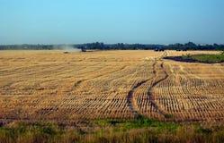 Effettuare i raccolti di estate su un giacimento di grano Immagine Stock Libera da Diritti