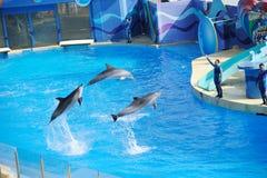 Effettuazione delfino e dell'addestratore Immagini Stock Libere da Diritti