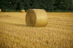 Effettui il raccolto che raccoglie il fieno rotolato sulla balla di fieno tagliata del foraggio dell'erba asciutta sul campo, l'a Immagine Stock