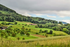 Effingen landscape. An Effingen - Switzerland field and trees landscape Royalty Free Stock Images