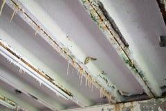 Efflorescentie van concreet plafond royalty-vrije stock foto