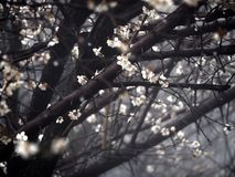 Effort de fleurs Photo stock