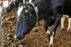 Effraye la ferme, village de kibboutz image libre de droits