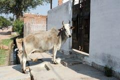 Effrayez l'attente pour entrer dans une porte de maison un Khajuraho photo libre de droits