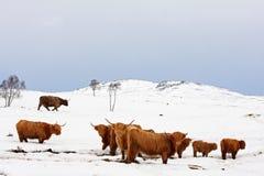 effrayez la neige des montagnes photo stock
