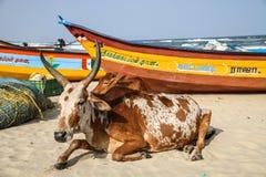 Effrayez le refroidissement sur la plage au soleil de Mahabalipuram, Tamil Nadu, Inde images stock