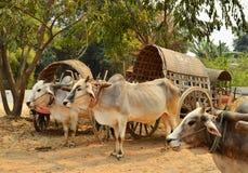 Effrayez le taxi de chariot à la pagoda de Mingun à Mandalay image stock
