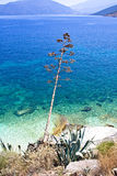 efimia cephalonia παραλιών agia στοκ εικόνες