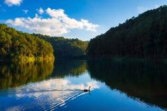 Eflection av sörjer trädet och blå himmel med gåsen Fotografering för Bildbyråer