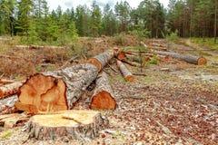 Eforestation et notation industrielle d'arbre photographie stock