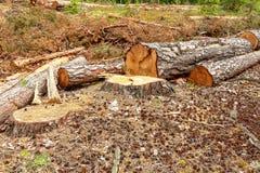 Eforestation et notation industrielle d'arbre photographie stock libre de droits