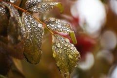 Efter Autumn Rain Royaltyfri Foto