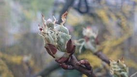 Efter blom av äppleträdet Arkivfoton